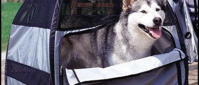Are Dog Backpacks Safe