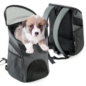Choose a backpack designed for dogs