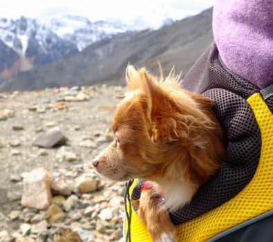 How Much Can a Dog Carry in a Backpack