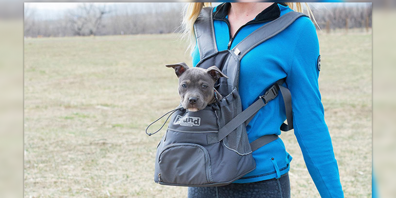 How Much Weight Can a Dog Carry in Backpack