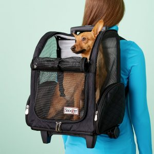 Types of Dog Carriers