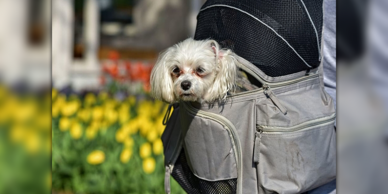Finding The Best Dog Carrier