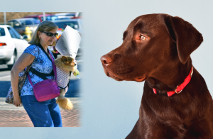 Tips For Getting The Most From Your Dog Pouch Carrier