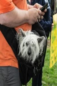Tips for keeping your dog pouch carrier clean