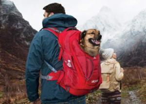 kurgo dog carrier ruck sack